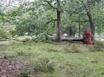Storm damage fallen trees